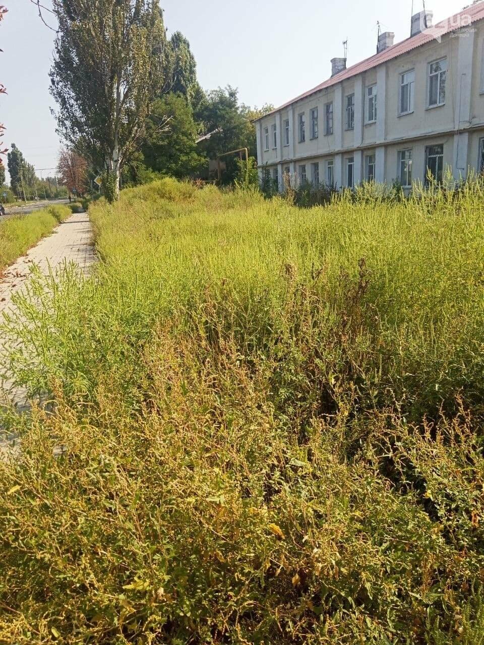 Улицы Донецка заросли амброзией в человеческий рост, - ФОТО, фото-3