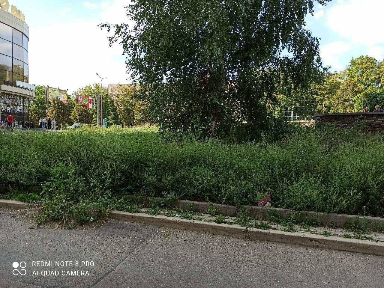 Улицы Донецка заросли амброзией в человеческий рост, - ФОТО, фото-1