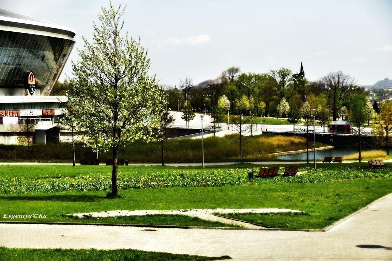 В парке «Донбасс Арены» российские  оккупанты выкорчевали аббревиатуру «Шахтера» (ФОТО), фото-1