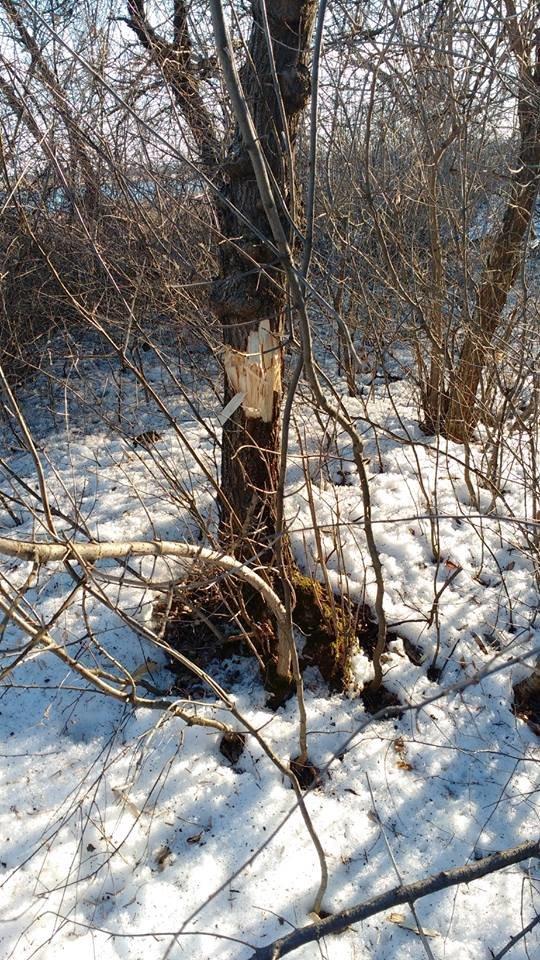 Российские оккупанты обстреляли поселок Новолуганское: разрушен частный дом, - ФОТО, фото-6