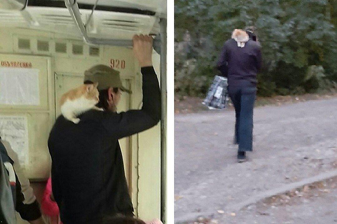По улицам Донецка ходит мужчина с кошкой на голове, - ФОТО, фото-2