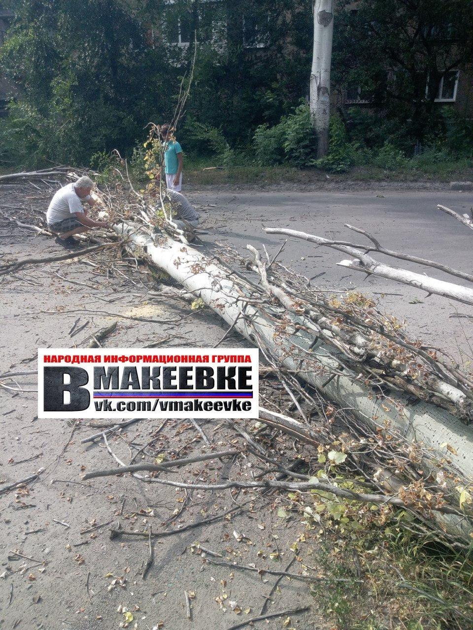 В Макеевке упавшее дерево убило женщину, - ФОТО , фото-2