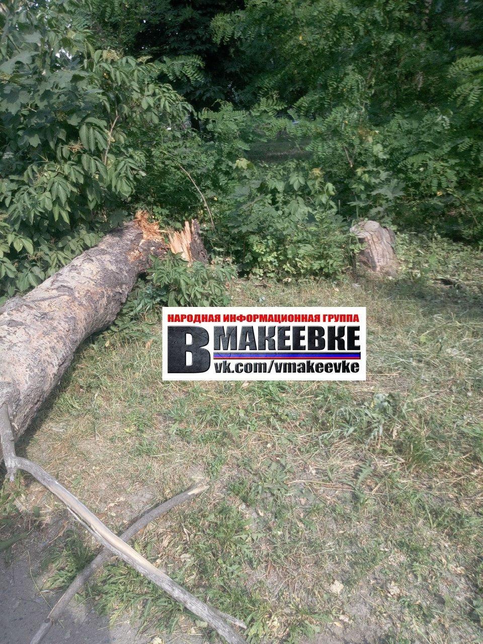 В Макеевке упавшее дерево убило женщину, - ФОТО , фото-4