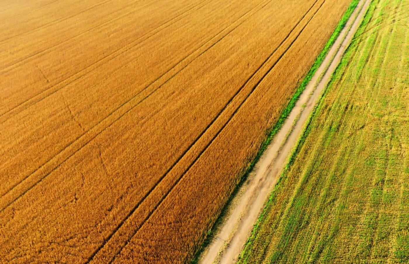 Мішки зерна замість грошей: чому мораторій на продаж землі буксує розвиток сіл Донеччини, фото-1
