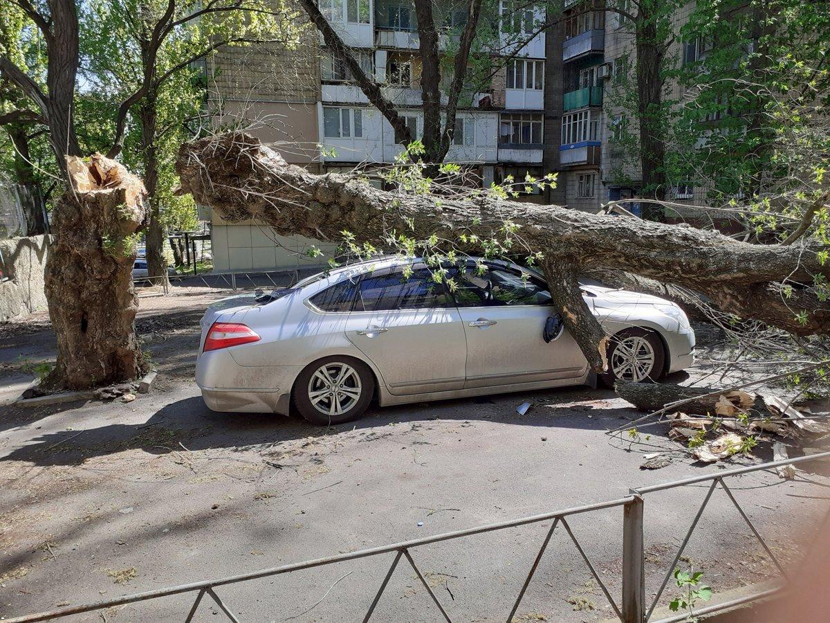 В оккупированном Донецке на автомобиль упало дерево,- ФОТО, фото-1
