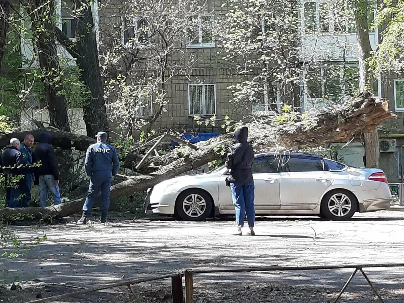 В оккупированном Донецке на автомобиль упало дерево,- ФОТО, фото-2