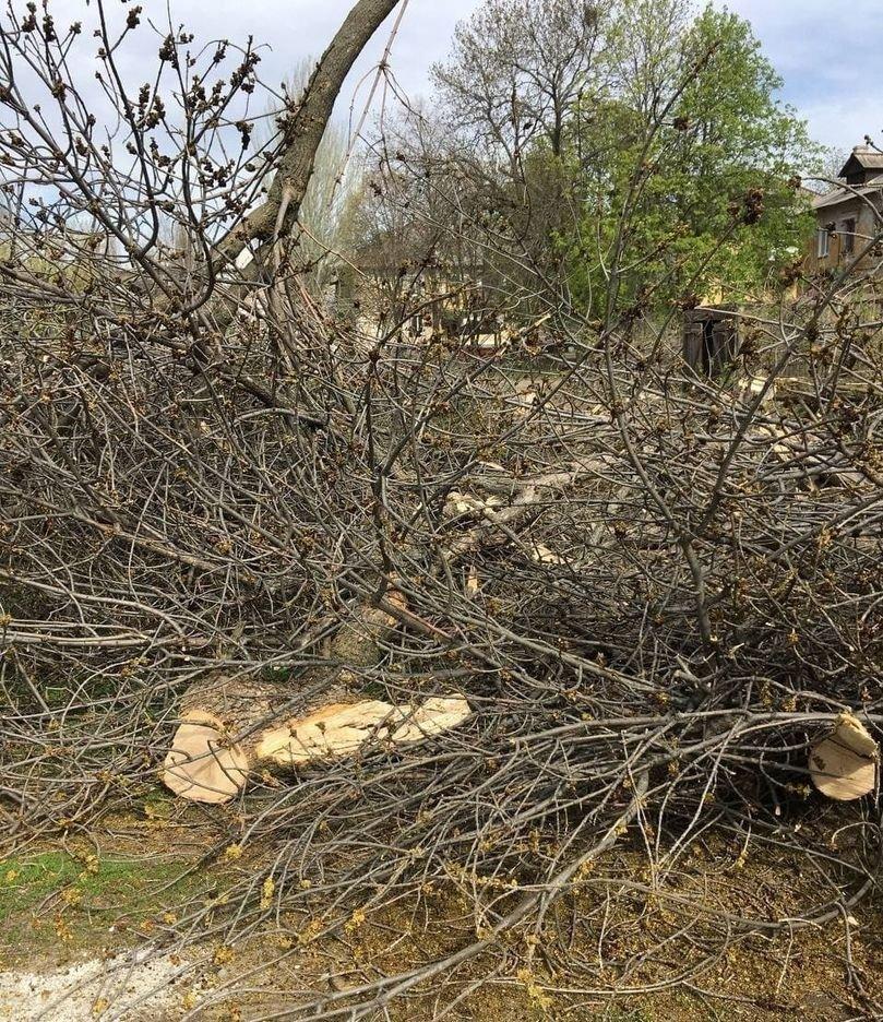 В оккупированной Макеевке единственный проезд во дворы завалили спиленными деревьями, - Фото, фото-1