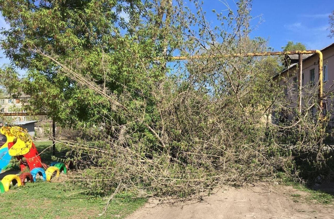 В оккупированной Макеевке единственный проезд во дворы завалили спиленными деревьями, - Фото, фото-2