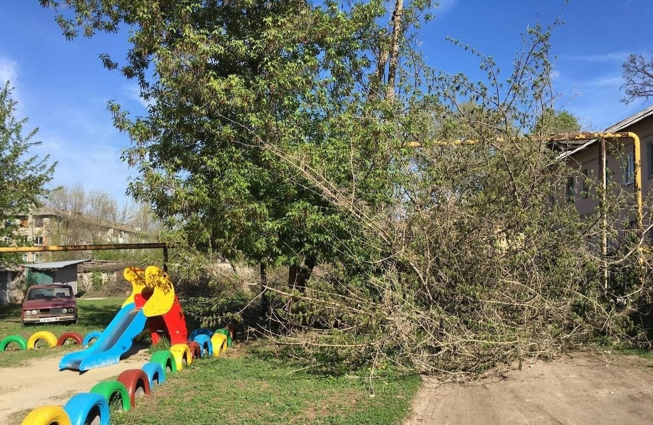 В оккупированной Макеевке единственный проезд во дворы завалили спиленными деревьями, - Фото, фото-3