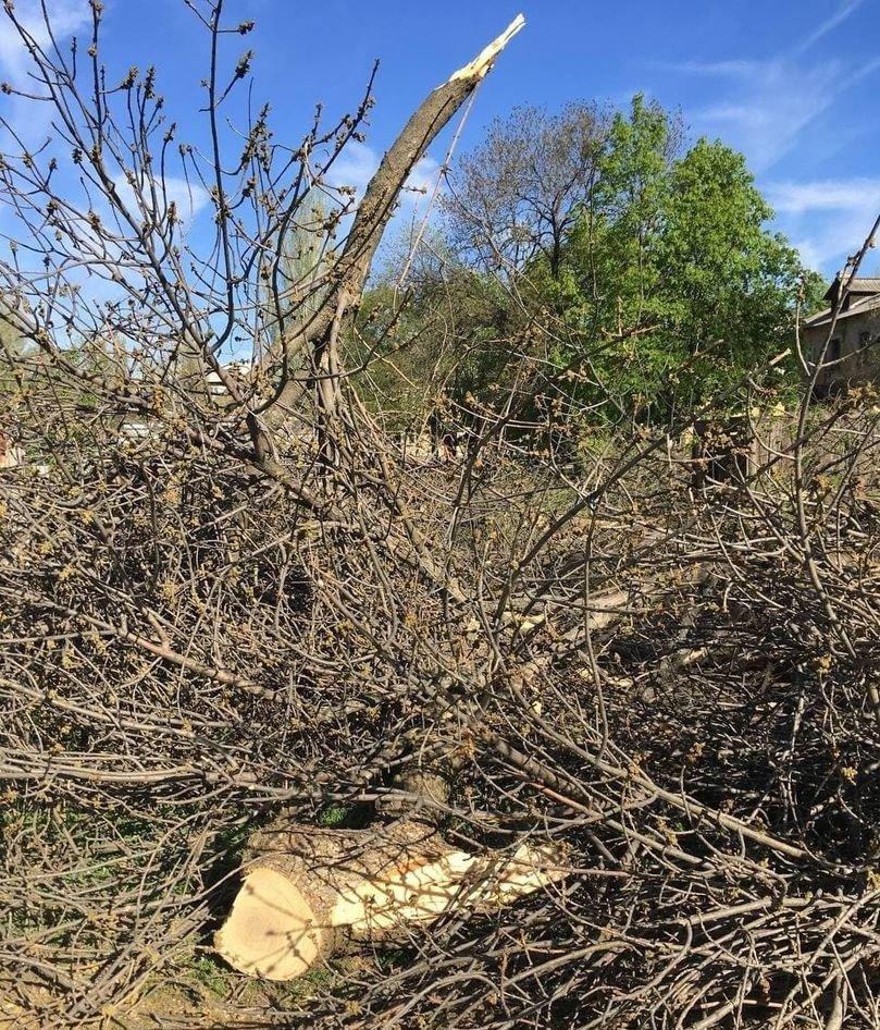 В оккупированной Макеевке единственный проезд во дворы завалили спиленными деревьями, - Фото, фото-4