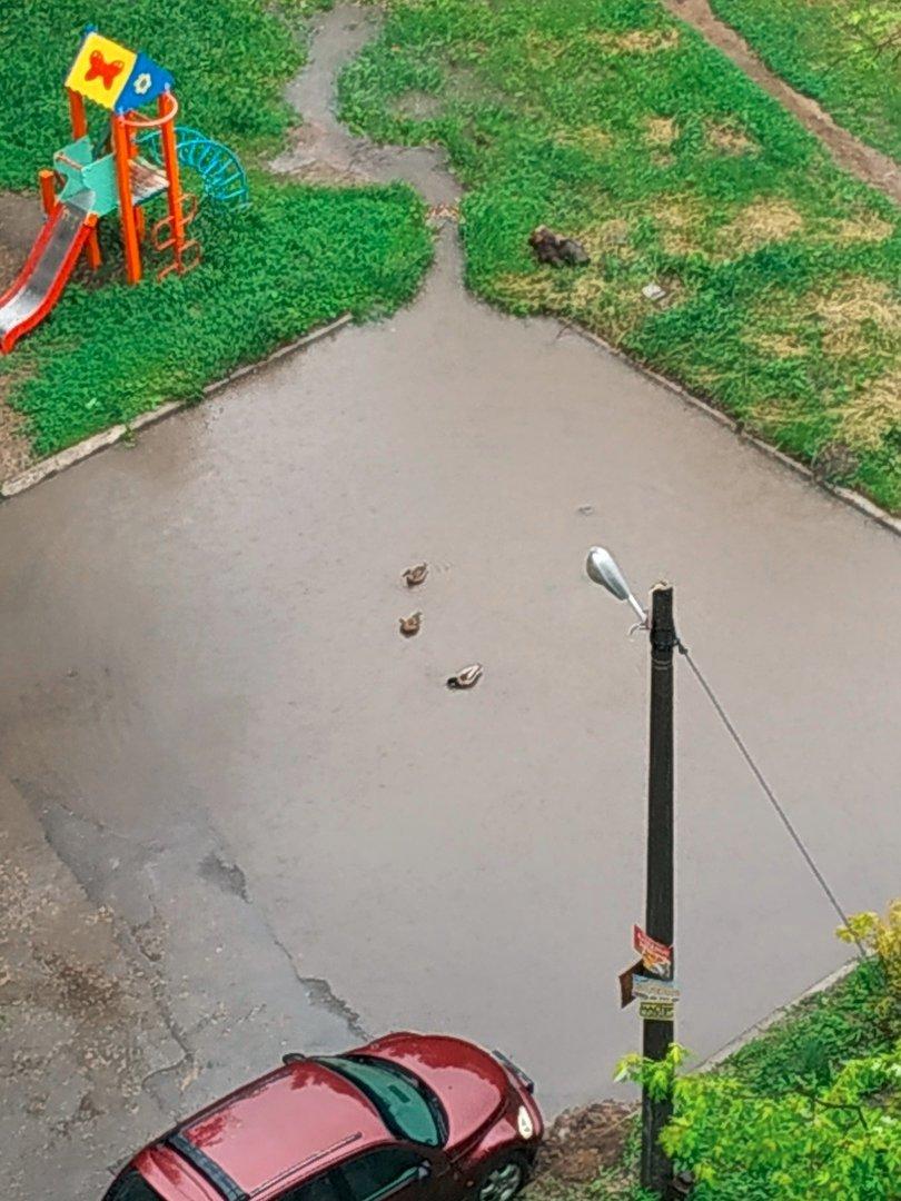 Непогода в Донецке: упавшие деревья, порванные провода и вышедшие из берегов ставки, - ФОТО, ВИДЕО, фото-1