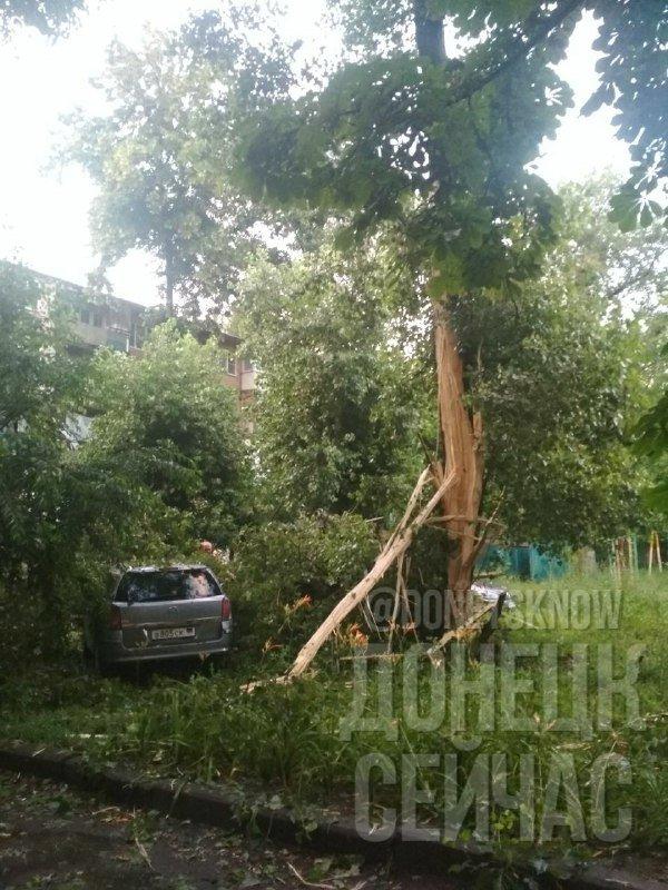 В оккупированном Донецке молния попала в дерево, - ФОТОФАКТ, фото-1