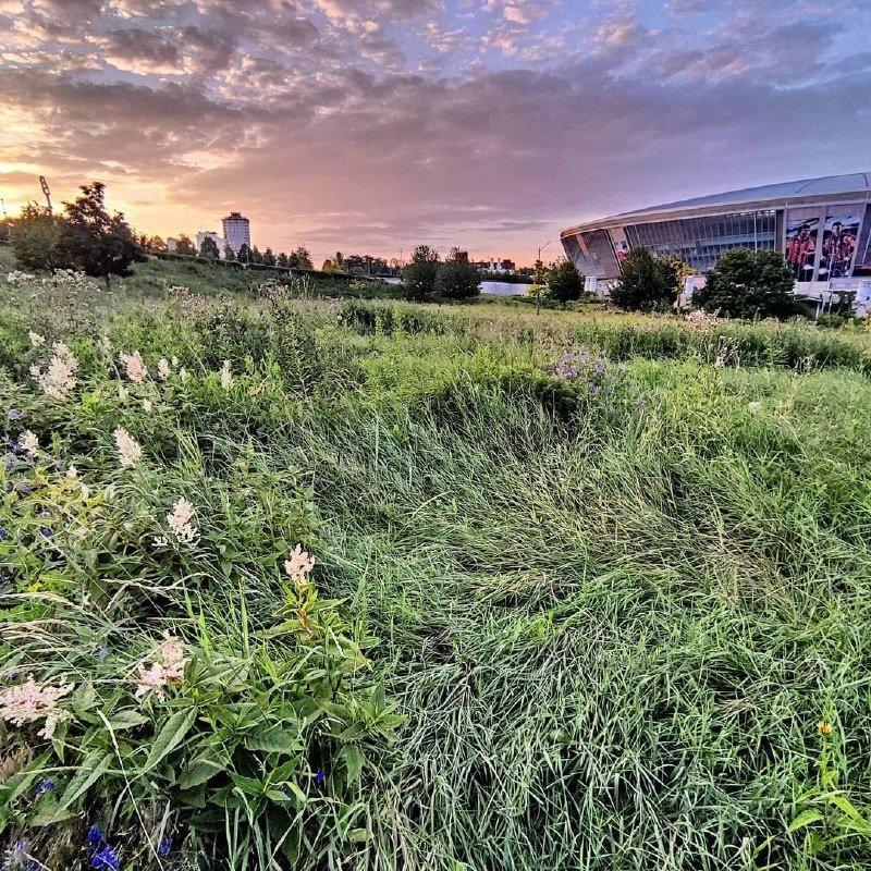 «А когда-то там играла сборная Англии»: «Донбасс Арена» зарастает сорняками, - ФОТО, фото-2