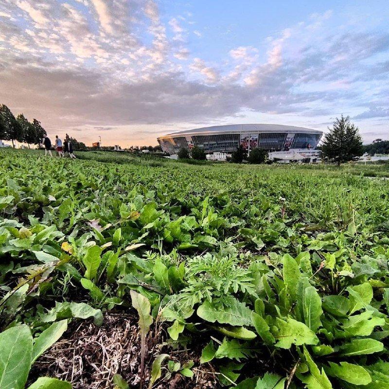 «А когда-то там играла сборная Англии»: «Донбасс Арена» зарастает сорняками, - ФОТО, фото-6
