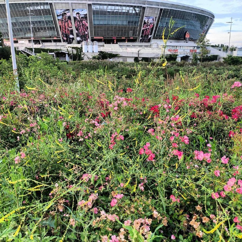 «А когда-то там играла сборная Англии»: «Донбасс Арена» зарастает сорняками, - ФОТО, фото-8