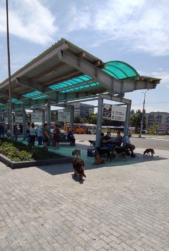 Донецк заполонили стаи бродячих собак, - ФОТОФАКТ, фото-1