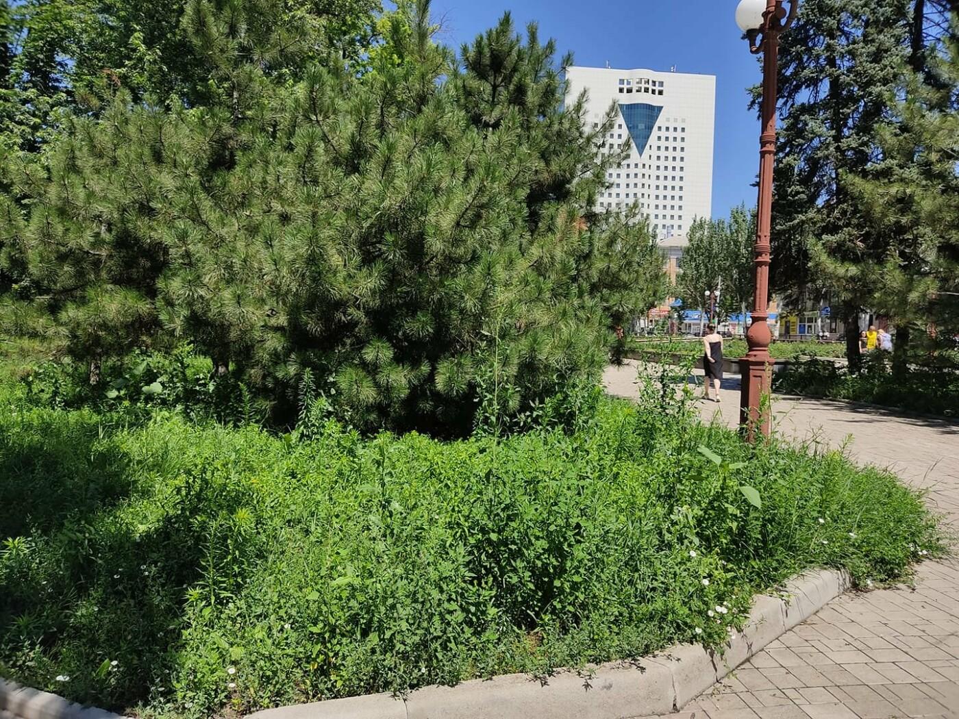 Трава по пояс: газоны в Донецке зарастают бурьяном, - ФОТО, фото-1