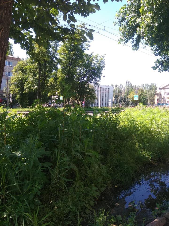 Трава по пояс: газоны в Донецке зарастают бурьяном, - ФОТО, фото-2