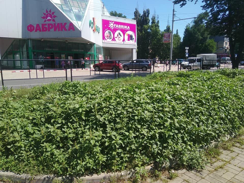 Трава по пояс: газоны в Донецке зарастают бурьяном, - ФОТО, фото-3