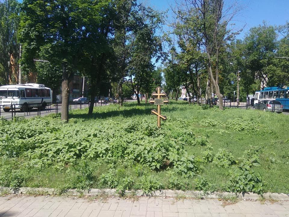 Трава по пояс: газоны в Донецке зарастают бурьяном, - ФОТО, фото-4