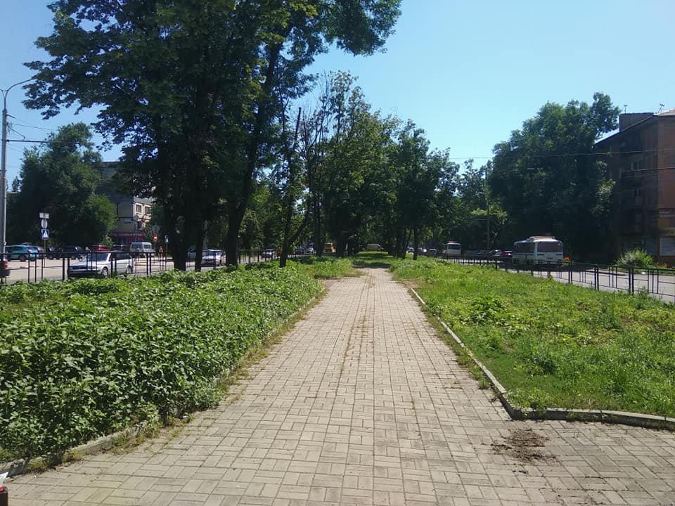 Трава по пояс: газоны в Донецке зарастают бурьяном, - ФОТО, фото-7