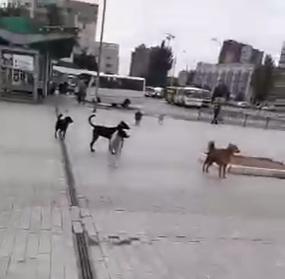 «Был город миллиона роз, а теперь город миллиона собак»: в Донецке нашествие бродячих животных, - ФОТО, фото-1