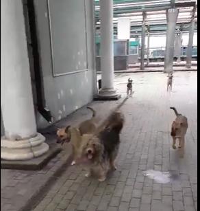 «Был город миллиона роз, а теперь город миллиона собак»: в Донецке нашествие бродячих животных, - ФОТО, фото-2