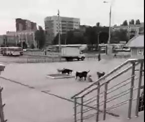 «Был город миллиона роз, а теперь город миллиона собак»: в Донецке нашествие бродячих животных, - ФОТО, фото-3