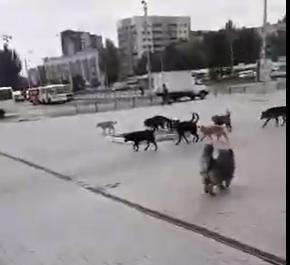 «Был город миллиона роз, а теперь город миллиона собак»: в Донецке нашествие бродячих животных, - ФОТО, фото-4