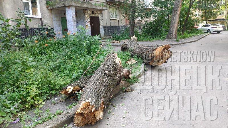 «Тарифы подняли, на мусор забили»: Донецк завален мусором, - ФОТО, фото-4