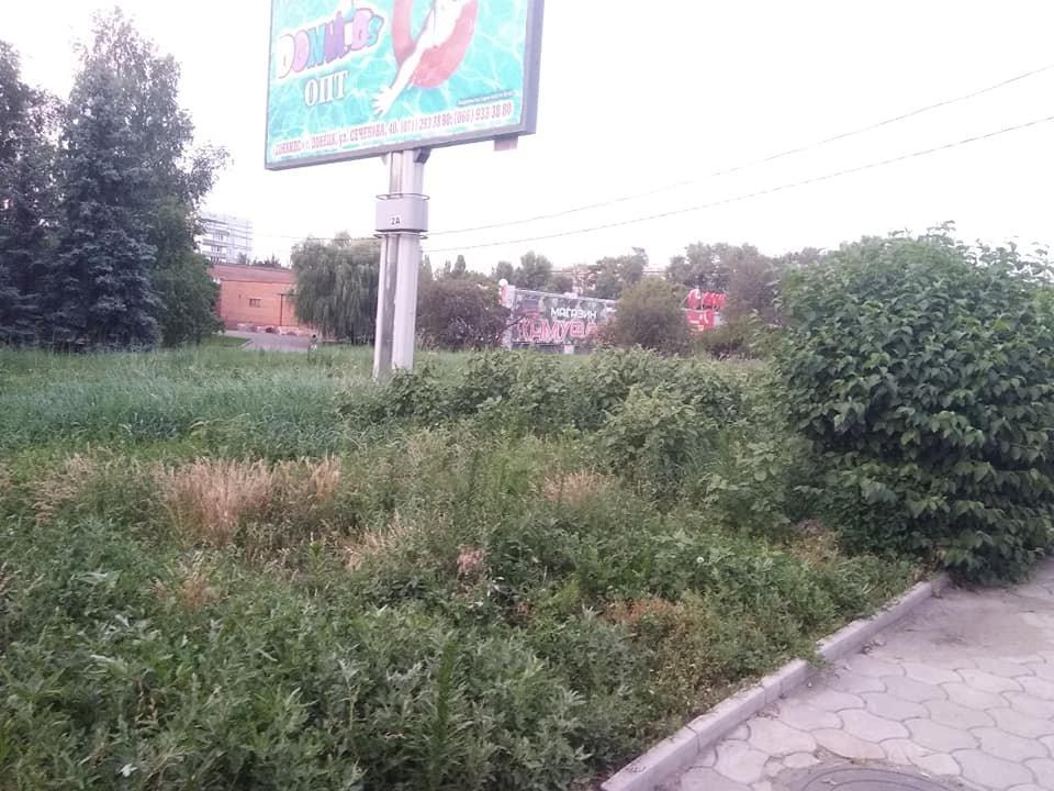 Роз не видно: Донецк зарос сорной травой, - ФОТО, фото-2