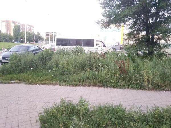 Роз не видно: Донецк зарос сорной травой, - ФОТО, фото-3
