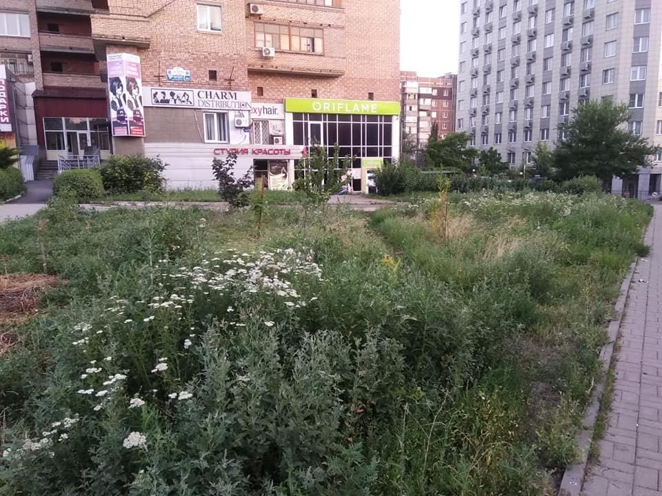 Роз не видно: Донецк зарос сорной травой, - ФОТО, фото-4