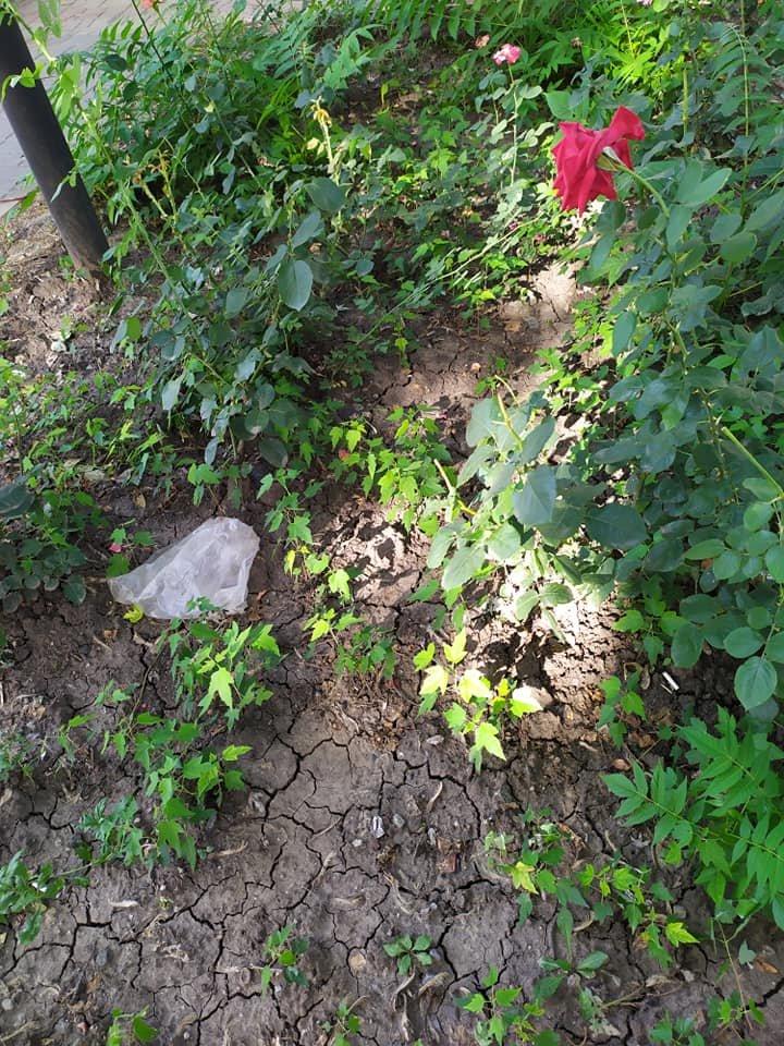 Окурки, объедки, умирающие розы: центр Донецка завален мусором, - ФОТО, фото-4