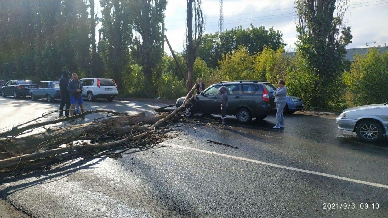 На незаконном КПП в Россию из ОРДО на авто упало дерево, - ФОТО, фото-2